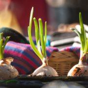 """10. martā Kalnciema kvartālā tirgus un bērnu darbnīca """"Katram savu čivulīti"""""""